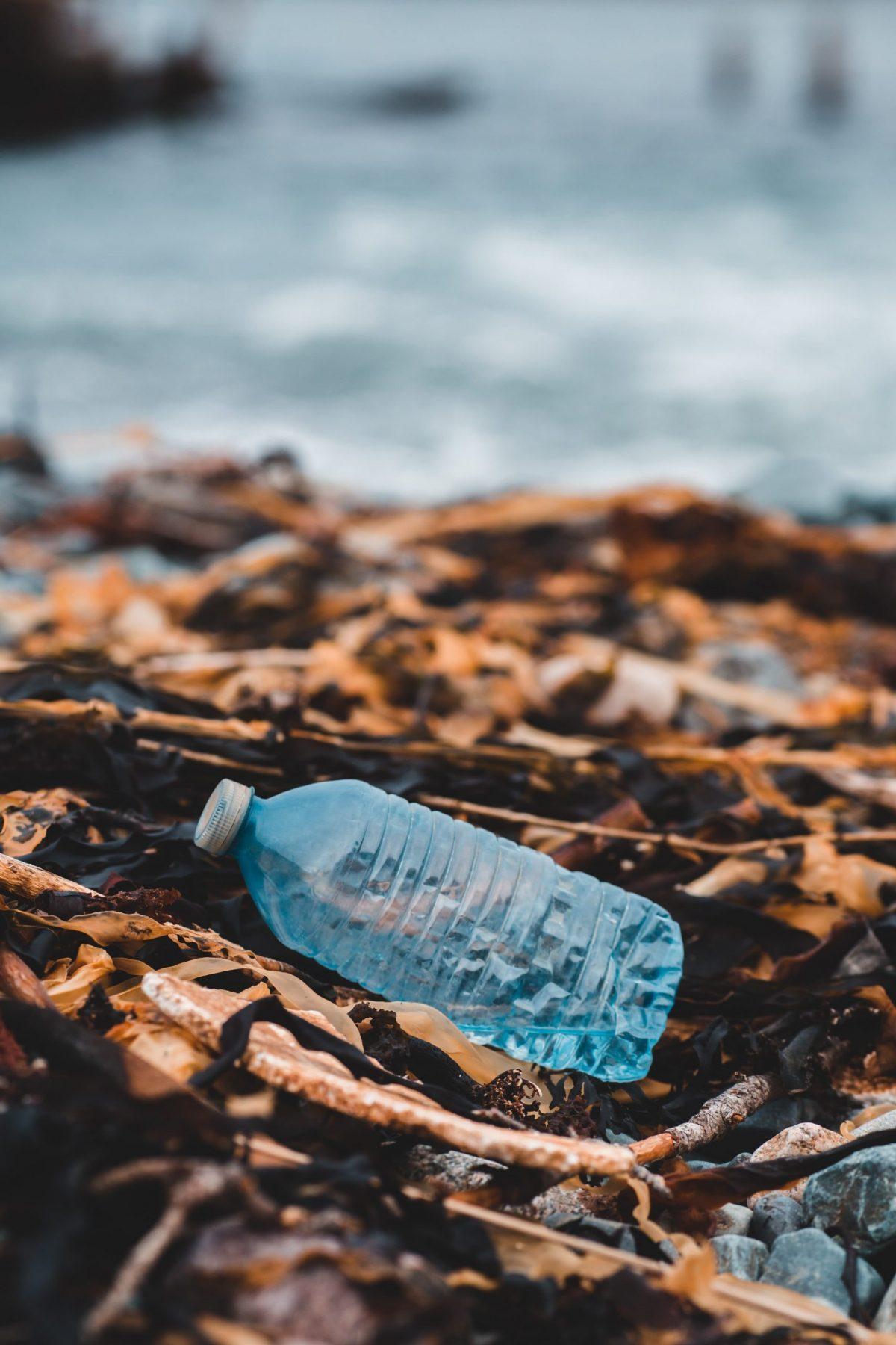 quanta plastica mangiamo